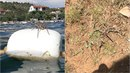 V Chorvatsku se objevuje čím dál více obřích pavouků. Jeden z nich se objevil...