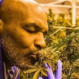 Mike Tyson má rád trávu.