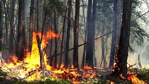 Lesy na Sibiři hoří ve velkém, aktuálně plocha v součtu velká jako Středočeský...