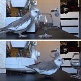 Oprsklí ptáci