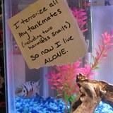 Zlobivé ryby