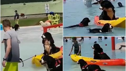 Psí aquapark je velmi populární.