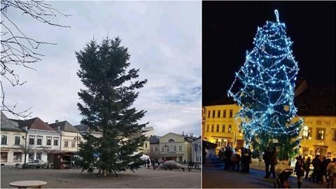 Titul pro nejhnusnější strom aktuálně drží v Bruntálu.