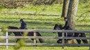 Královna Alžběta a její královská projížďka na koni