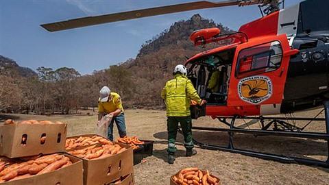 Australané shazují zeleninu z letadel, aby nakrmili hladovějící zvířata.