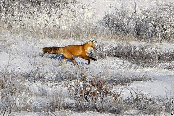 Poslední liška se vzteklinou se v České republice objevila v roce ... 821c5ba75e