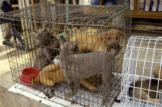 9cb88766212 Místo pokut bude za týrání zvířat vězení - iDNES.cz