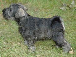 Původem jsou malí knírači z okolí Frankfurtu nad Mohanem. V Německu se  tento pes jmenuje Zwergschnauzer. Dorůstá velikosti mezi 30-35 cm a váží do  8 kg. 99e4be47d3