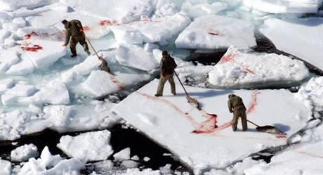 ddbf620da48 V Kanadě každým rokem zemře ročně na tři sta tisíc převážně tuleních ...