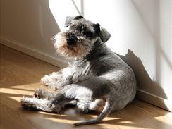 Pro psa, který je příliš závislý na svém pánovi, je příliš stresující, když zůstane doma sám.