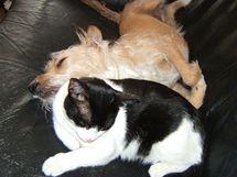Kočky a psi roznášejí blechy po bytě - na pohovky nebo koberce ... 8fae855694
