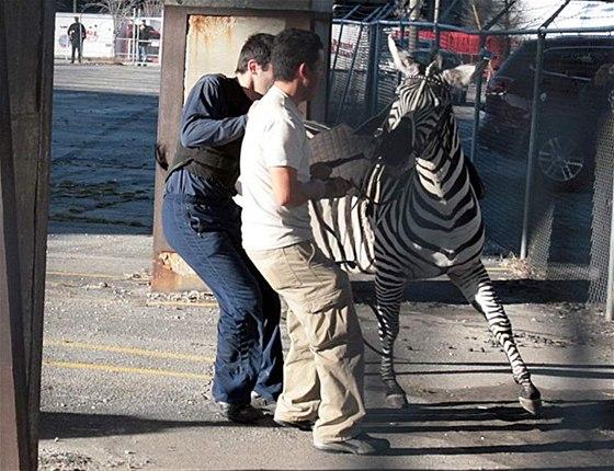 4ab46b9ca51 Konec medvědů v teplácích. Evropou se šíří zákaz zvířat v cirkusech ...