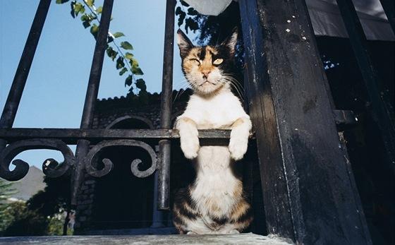 Eboney chlupatá kočička