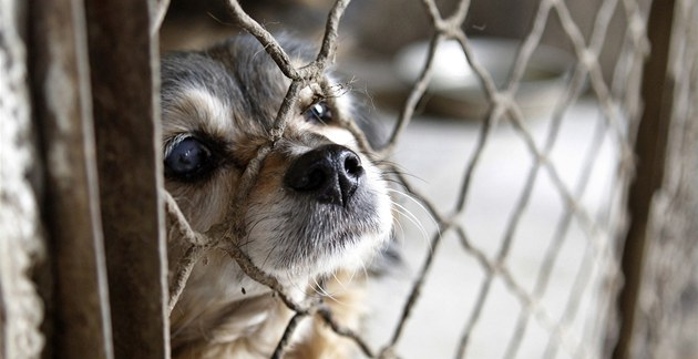 Výsledek obrázku pro psí utulek