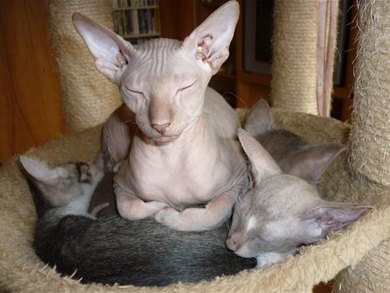 obrázky nahé kotě
