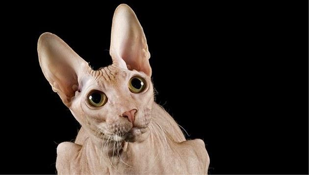bezsrstá kočička fotky zdarma porno video s vysokým rozlišením