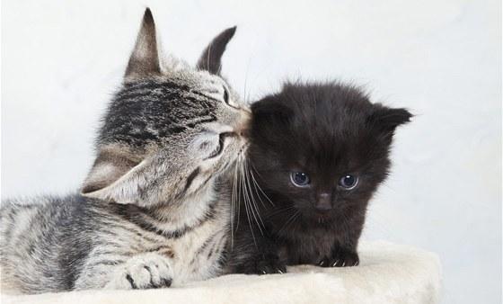 jíst tuto černou kočičku zdarma krásky ženy porno