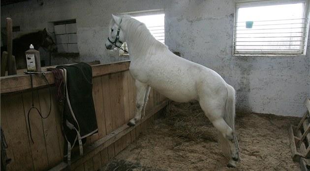 Splašený kůň nechal mladou ženu zraněnou v lese. Našli ji