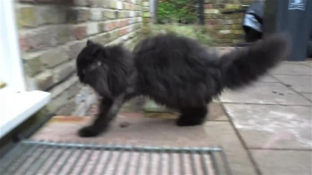 Zdarma malá černá kočička