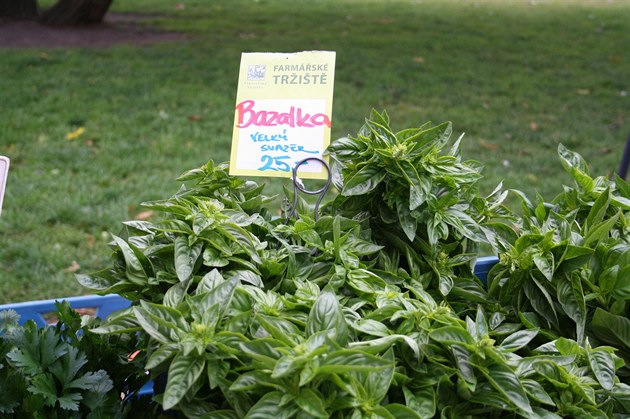 KVÍZ: Jak se vyznáte v pěstování bylinek do jídla?