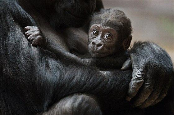 Kam Vyrazit O Vikendu Do Zoo Na Hrad Na Dozinky Nebo Za
