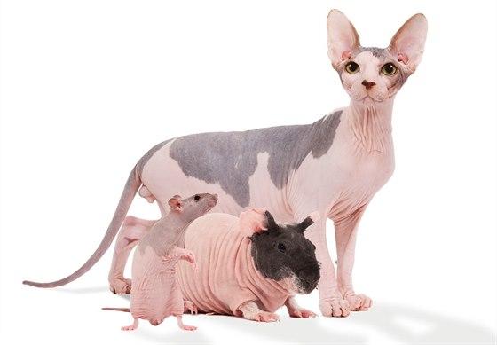 Nahé kočičky