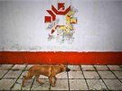 A dog walks past the Olympic snowflake logo on the wall of the Kosevo stadium,...