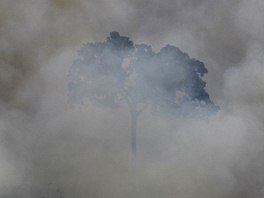 Smoke billows as an area of the Amazon rainforest is burnt to clear land for...