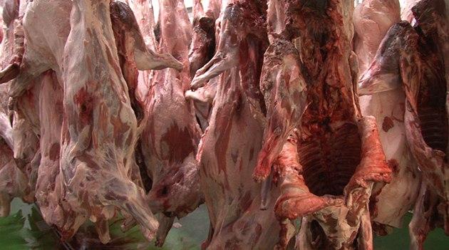 Na jatka, kde se týrala zvířata, míří žaloba. Nejde o běžnou praxi, brání se