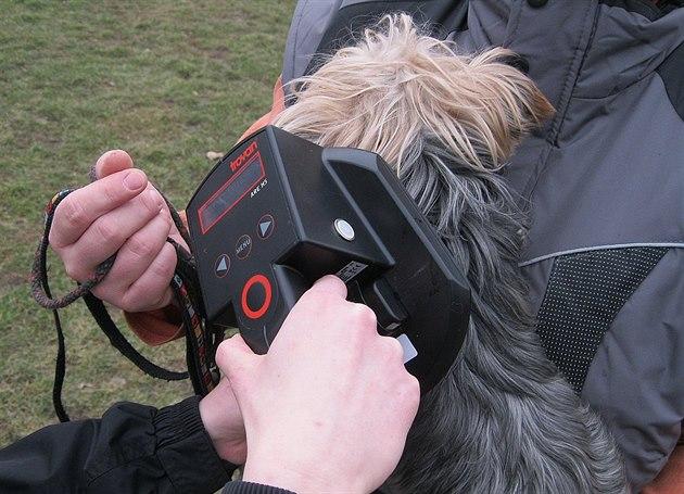 Čipování psů neřeší hlavně na vesnicích, část majitelů s ním vůbec nepočítá