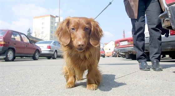 Za hodinu venčení 150 korun. V Brně a okolí vznikají psí školky ... 63f54361c6