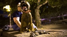 Merlin, a Border Terrier, stands over a dead rat he killed during an organized...