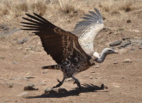 Velké většina ptáků