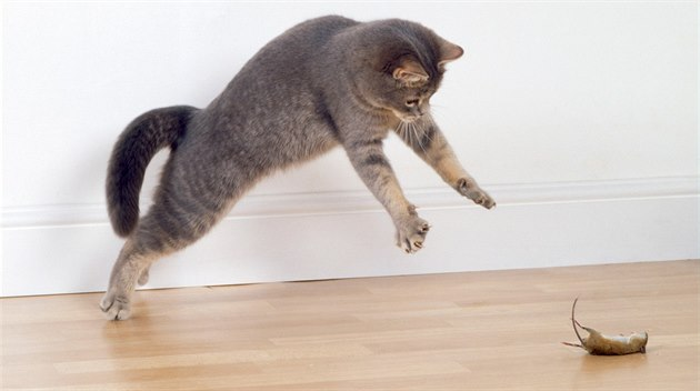 cat straining to wee