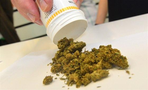 Léčebné konopí v uherskohradišťské lékárně (ilustrační snímek)