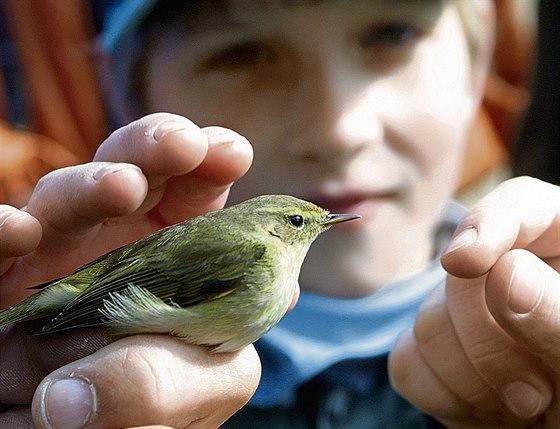 Dospívající ptáci