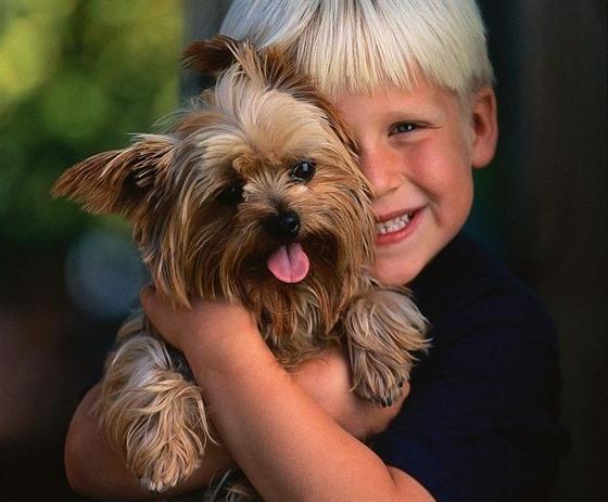 Deset nejoblíbenějších psích mrňousů. Vedou jezevčík 28f5576665