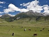 Pastva v horách u hranic s Kazachstánem