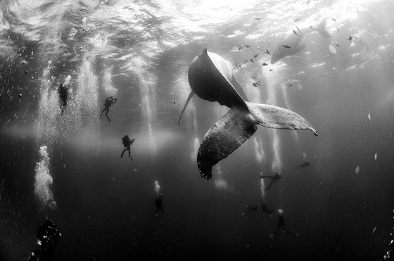 Fotograf Anuar Patjane Floriuk získal druhou cenu v kategorii Příroda se...