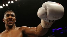Ruský boxer z roku hayden