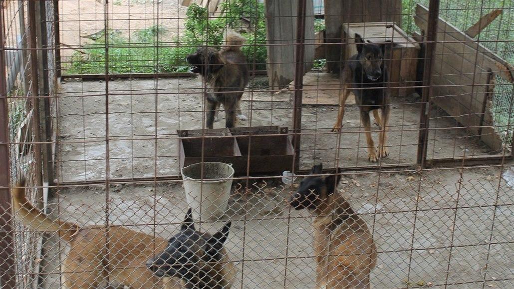 ec00759fa28 Za smrtelný útok psů na chlapce padly podmínky. Pro majitele i pro ...