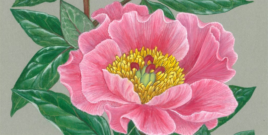 Kvetiny Dovedly Ilustratorku Z Orlickych Hor Az Do Ciny A Na Sibir