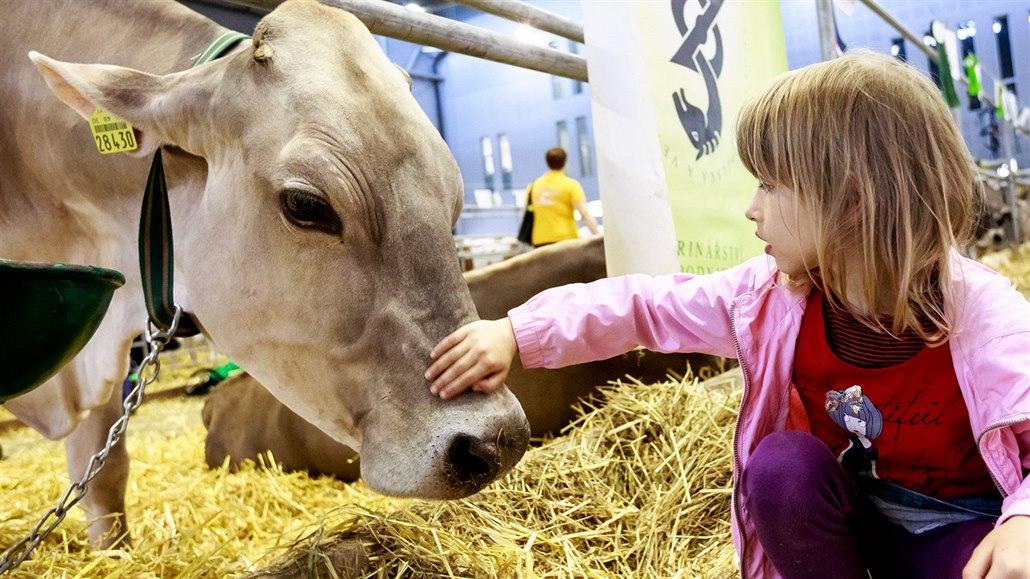 Výstaviště v Brně zaplní stovky krav či koní, začíná národní výstava zvířat
