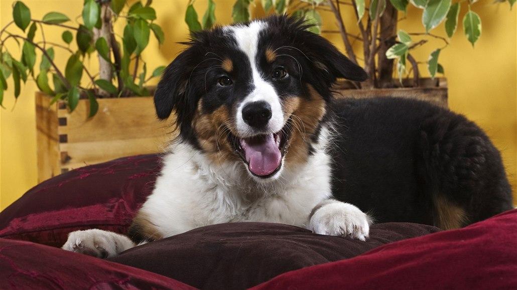 Bydlím v nájmu s několika staršími psy. Správce domu se mi začal ... 00be5a34681