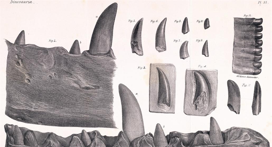 Většinu dinosaurů jsme popsali až v novém tisíciletí, prvního před 222 lety