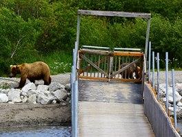Medvědice s medvíďaty u mostku pro turisty