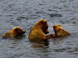 Medvědice s medvíďaty ve vodě