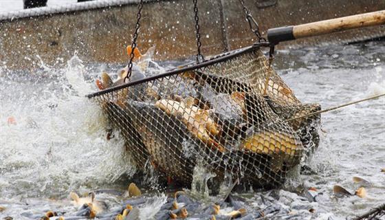 Zdarma seznamky zdarma ryby