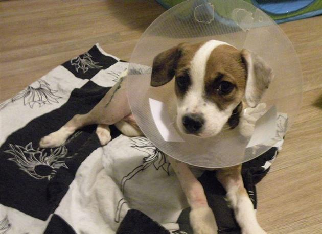 Surovec, který bil štěně, musí zaplatit za jeho léčbu přes 70 tisíc