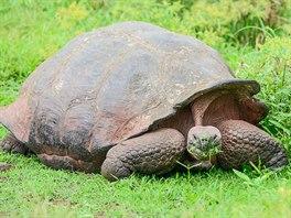 Želva sloní - největší ze všech želv světa, může vážit až 250 kg. Jsou to...